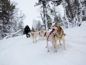 Dog sledding in northern Sweden (c) Fredrik Broman/imagebank.sweden.se